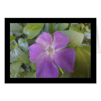 Wenig lila Blüten-Lied von Solenoid. 8:7 grüßen. Karte