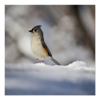 Wenig Schnee-Vogel Poster