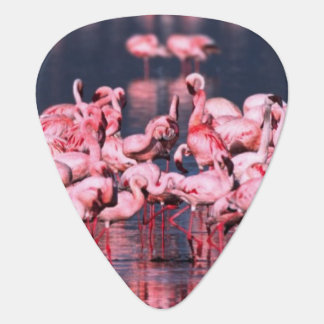 Wenige Flamingos (Phoeniconaias Minderjähriger), Plektron