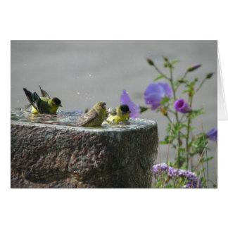Wenige Goldfinches im Birdbath Karte