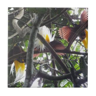 Wenige Paradiesvögel vom tropischen Regenwald Keramikfliese
