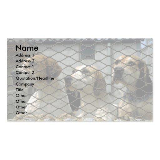 Wensleydale Foxhounds in den Hundehütten, Visitenkarte