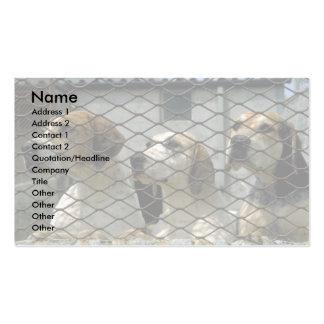 Wensleydale Foxhounds in den Hundehütten, Visitenkarten