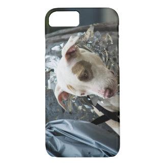 Wertvoller Karnevals-Diva-Welpe iPhone 7 Fall iPhone 8/7 Hülle
