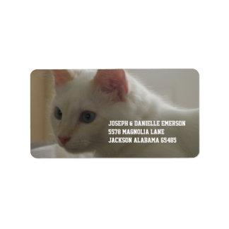 Wertvoller weißer Kitty Adressetikett