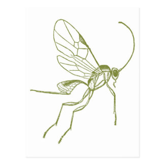 Wespe, Meteorus Hyphantria Postkarte