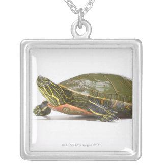 Western gemalte Schildkröte (Chrysemys picta Versilberte Kette