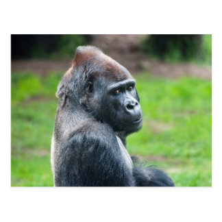 Western-Tiefland-Gorilla Postkarte
