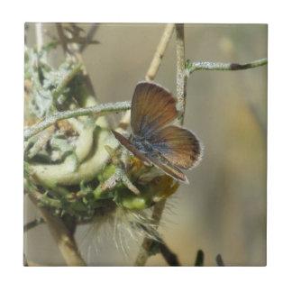 Western-unbedeutender blauer Schmetterling Keramikfliese