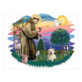 Westhochland Terrier (#1) Postkarten