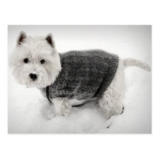 Westhochland Terrier in der Strickjacke im Schnee Postkarte