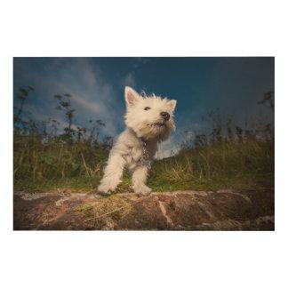 Westhochland-Terrier-Welpe Holzdruck