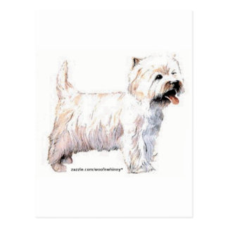 Westhochland-weiße Terrier Postkarte
