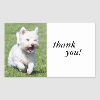 Westhochland-weißer Terrier, westie Rechtecksticker