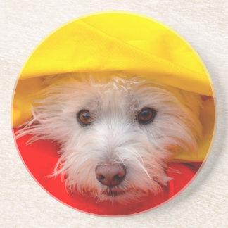 Westhochland weißes Terrier, das aus Gelb heraus Getränkeuntersetzer