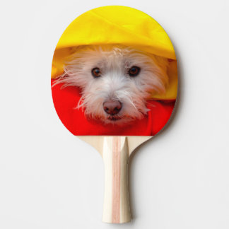Westhochland weißes Terrier, das aus Gelb heraus Tischtennis Schläger