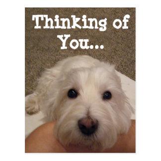 Westie, das an Sie Foto-Postkarte denkt