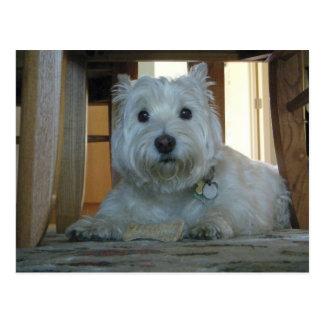 Westie mit Hundeknochen-Foto-Postkarte Postkarte