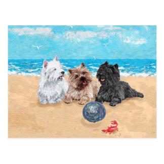 Westie mit Steinhaufen-Terriern am Strand Postkarte