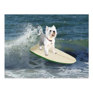 Westie Surfer Postkarten