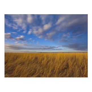 Wheatgrass und drastische Himmel in Freezeout See Postkarte