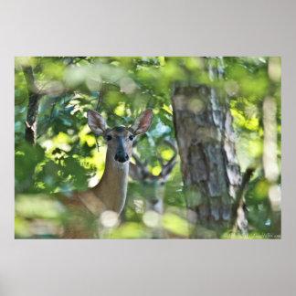 Whitetail-Damhirschkuh #Photobomb durch gruselige Poster