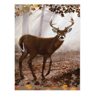 WhiteTail-Dollar-Herbstlaub Postkarte