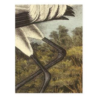 Whooping Kran, John Audubon Postkarte