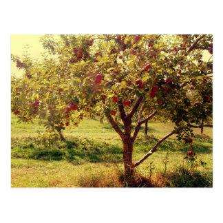 Wie 'Kampf sie Äpfel Postkarte