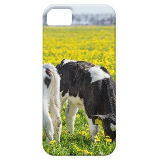 Wiese mit drei neugeborene calfs im Frühjahr Etui Fürs iPhone 5