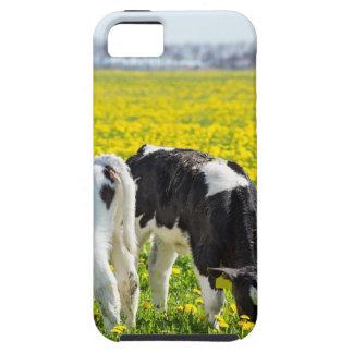 Wiese mit drei neugeborene calfs im Frühjahr iPhone 5 Hülle