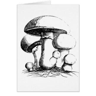 Wiesen-Pilz-Gruß-Karten Grußkarte