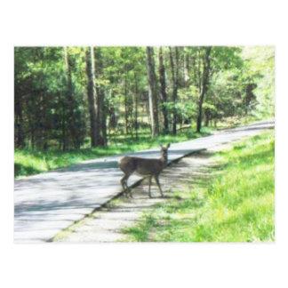 wild lebende Tiere in den smokies #72 Postkarte