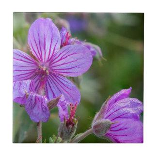 Wildblumen der klebrigen Pelargonie Keramikfliese