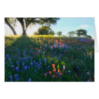 Wildblumen im Abends-Licht Karte