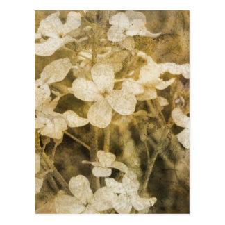 Wildblumen im Sepia Postkarte