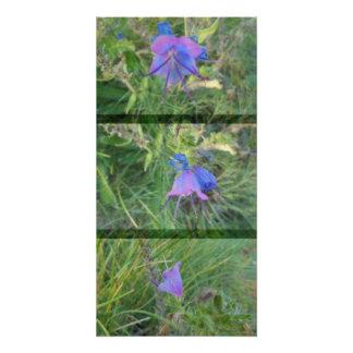 Wildblumen in der Flieder Poster