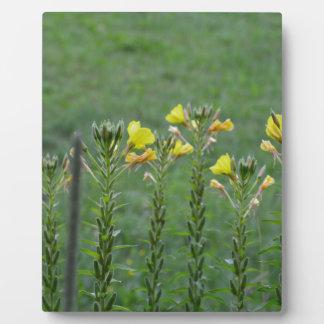 Wildblumen in Reihe Fotoplatte