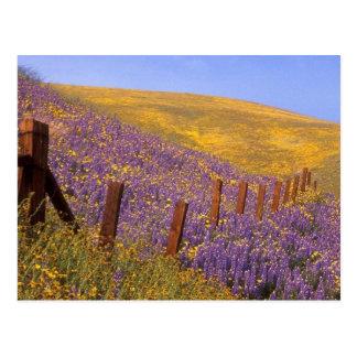 Wildblumen und Zaun-Posten Postkarte