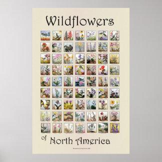 Wildblumen von Nordamerika Poster
