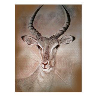 Wilde Antilopen-Postkarte Postkarte