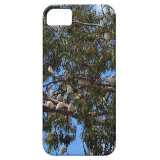 Wilde australische weiße Cockatoos, iPhone 5 Cover