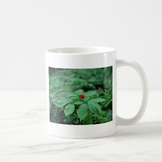 Wilde Blumen des Ginsengs (Panax Quinquefolius) Kaffeetasse