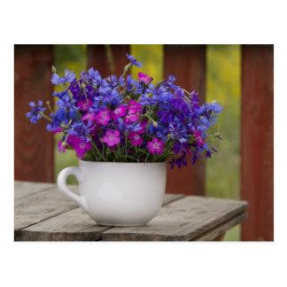 wilde Blumen, Gartennelke und Cornflower Postkarte