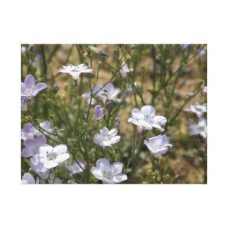 Wilde Blumen in der Mojave-Wüste! Leinwanddruck