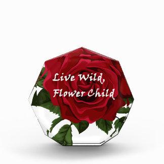 Wilde Blumen-KinderlebhaftRose Auszeichnung