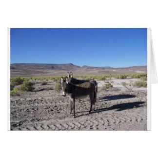 Wilde Burros in Nevada Karte