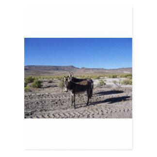 Wilde Burros in Nevada Postkarte
