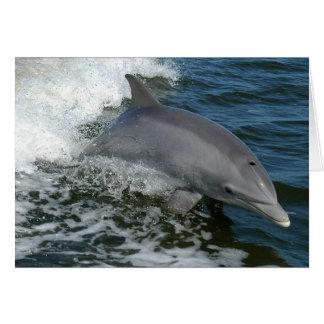 Wilde Delphin-Gruß-Karte Karte