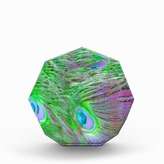 Wilde grüne Pfau-Federn Acryl Auszeichnung